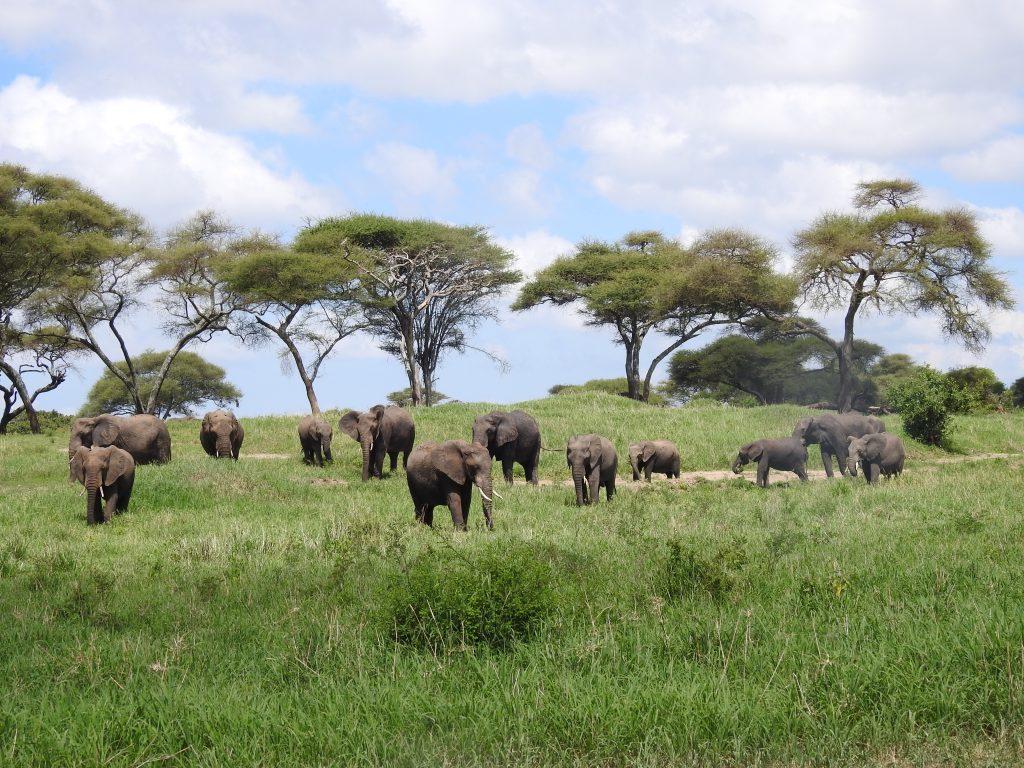 Famille d'éléphants du Tarangire