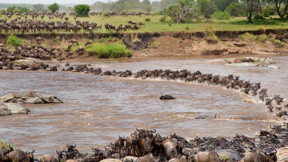La Grande migration dans le Parc National du Serengeti en passant par la Rivière Mara