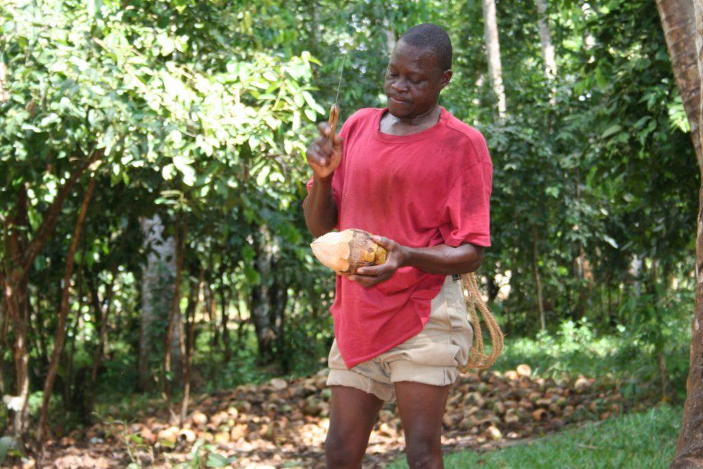 Safari Zanzibar Découverte des plantations